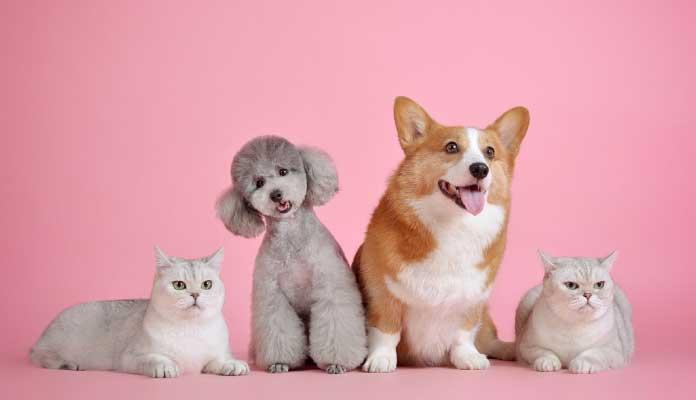 agencias de marketing españa veterinarios